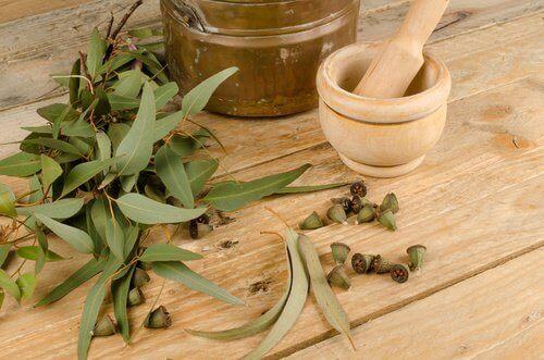 eukalyptus täiden karkottamiseksi