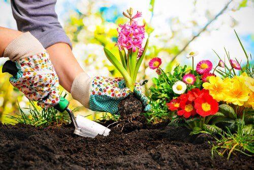 puutarhan hoito