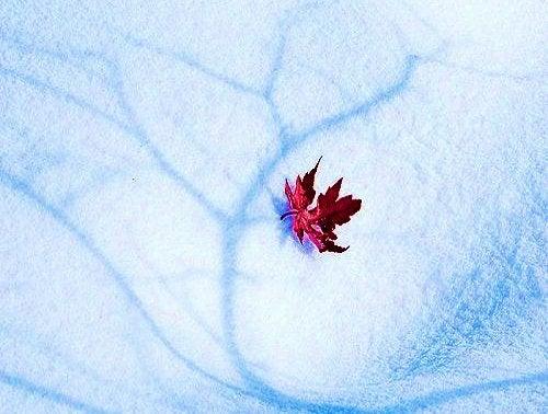 puunlehti lumessa