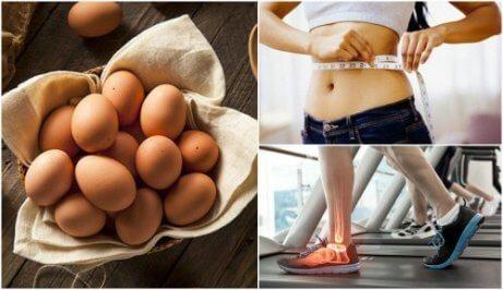 7 syytä alkaa syödä kananmunaa