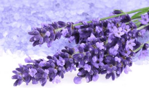 laventelia verenpaineen alentamiseksi
