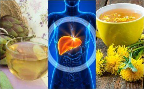 Torju ja hoida rasvamaksaa näillä 5 yrtillä