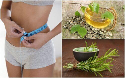 8 terveellistä yrttiä, jotka ovat avuksi dieetillä