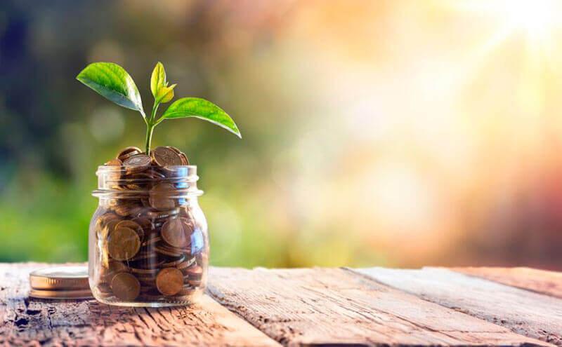 rahoista kasvaa kasvi