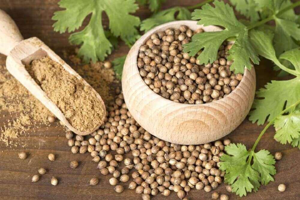 viisi luontaishoitoa runsaisiin kuukautisiin: korianterin siemenet