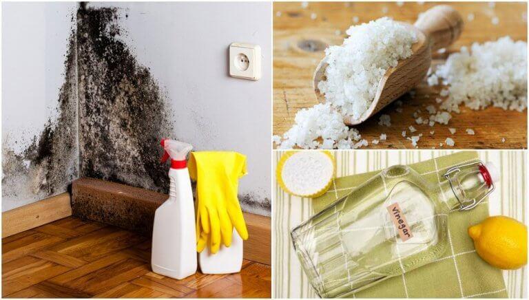 Poista home ja kosteus kotoa – 5 tehokasta niksiä
