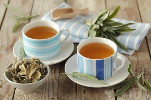 viisi parasta teetä; salviatee