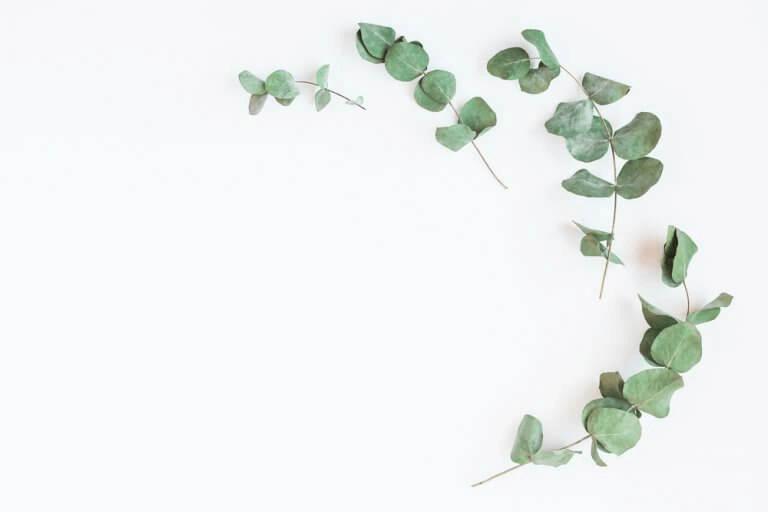 vahvista keuhkoja eukalyptuksella
