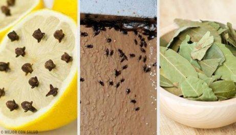 Eroon hyönteisistä luonnollisin konstein