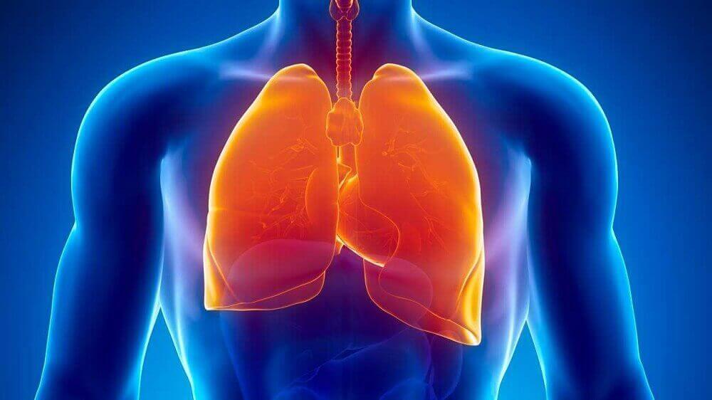 yleuset syyt yöhikoiluun; tuberkuloosi