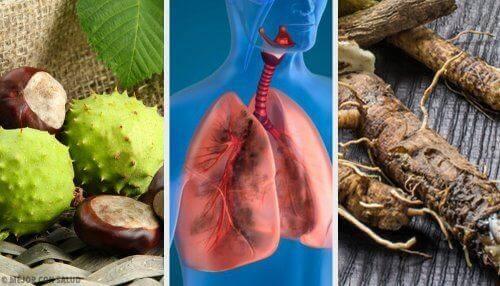 Paranna hengitystä ja vahvista keuhkoja: 4 kotihoitoa