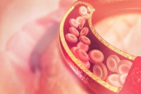 Omega-3 – mistä ruoista niitä saadaan eniten?