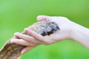 kädessä koiran tassu