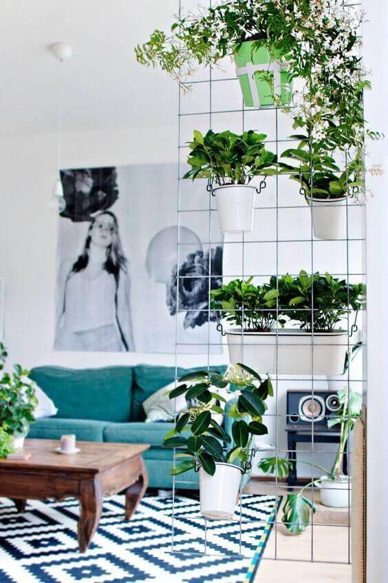 kasvit ovat tilanjakaja