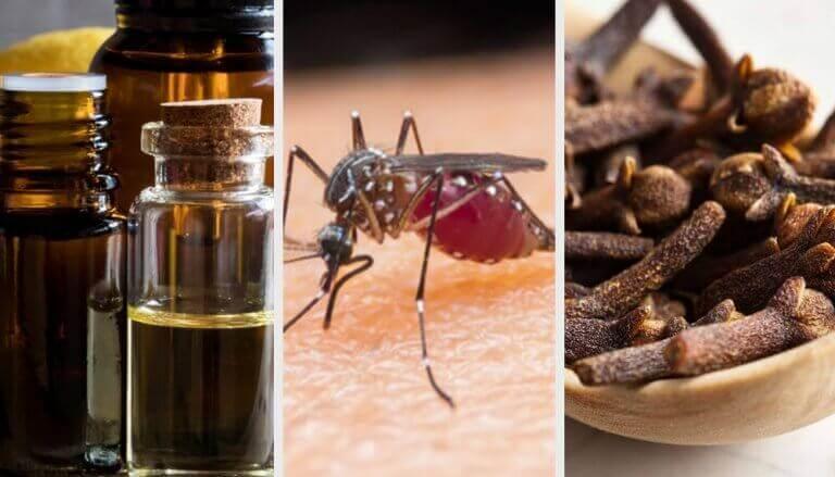 10 tuoksua, jotka karkottavat hyttysiä