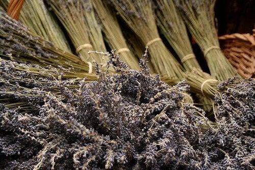 kuivatut laventelit
