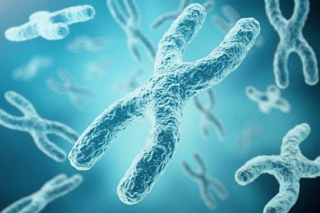 kromosomit
