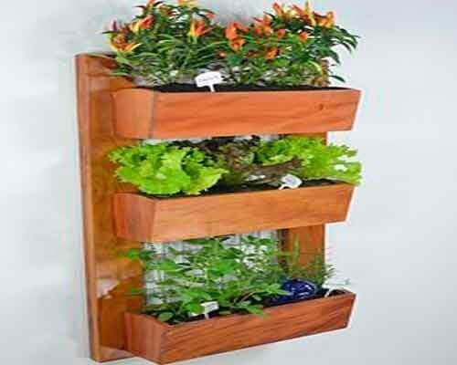 seinäkasvit
