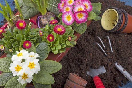 10 helppoa kasvia kotiin istutettavaksi