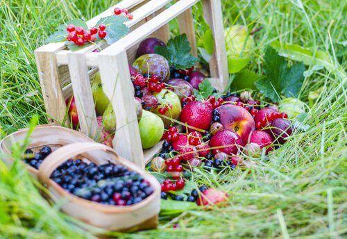 marjoja ja hedelmiä
