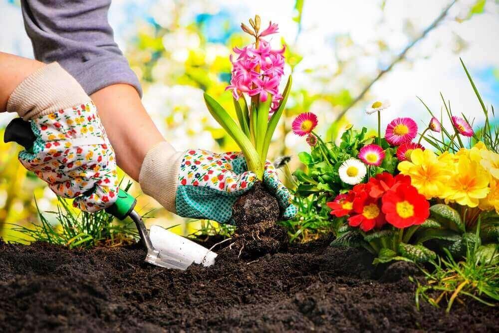 istuta kukkia puutarhaan