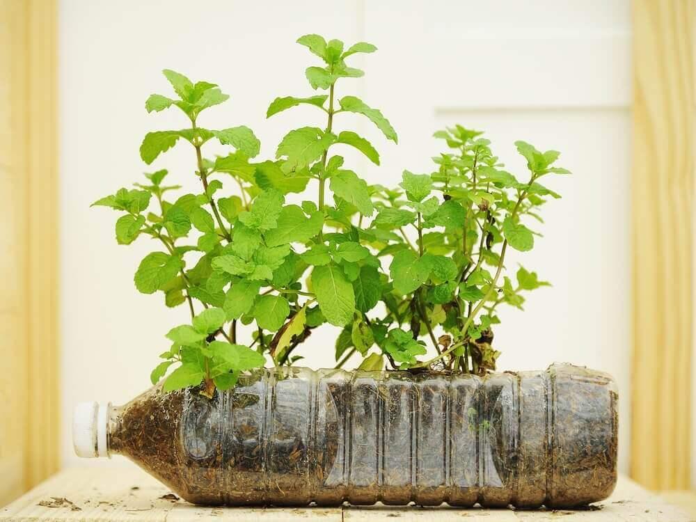Voit käyttää vanhoja muovipulloja kukkaruukkuina.