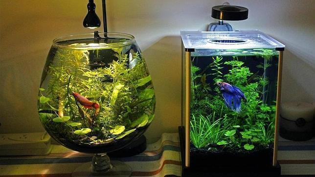 Paras tapa puhdistaa akvaario
