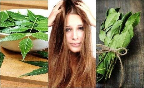 Saat kauniit hiukset hoitamalla hiuksia rosmariinilla.