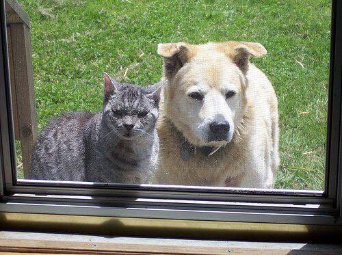 koira ja kissa kurkkivat sisälle