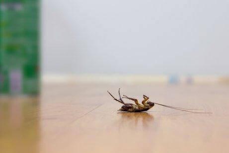 Neljä vinkkiä torakoiden karkottamiseen ilman hyönteismyrkkyjä