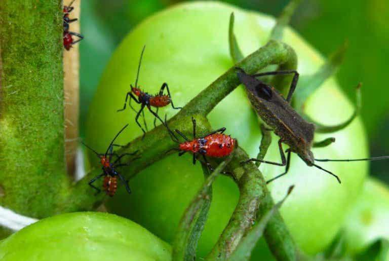 Luonnolliset tuholaismyrkyt: 5 helppoa vaihtoehtoa