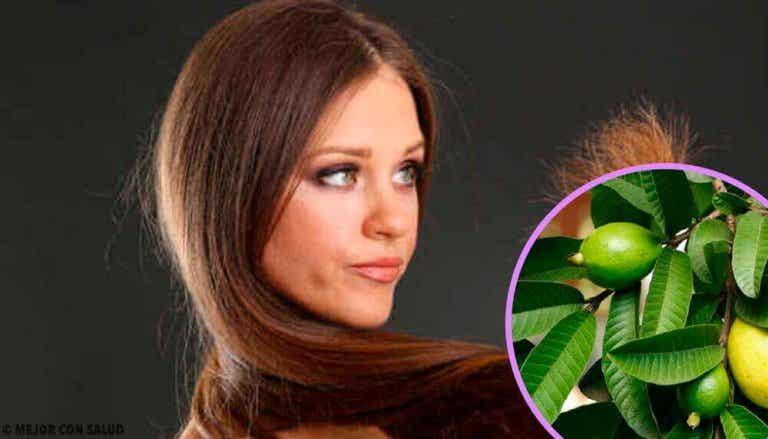 Vahingoittuneiden hiusten hoito guavan lehdillä