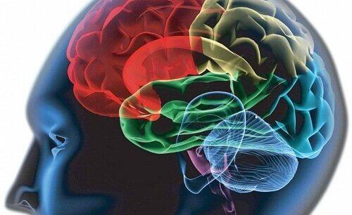 aivojen eri osat