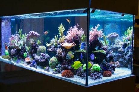 miten kannattaa puhdistaa akvaario