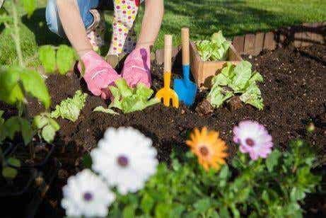 7 tapaa hyödyntää etikkaa puutarhassa