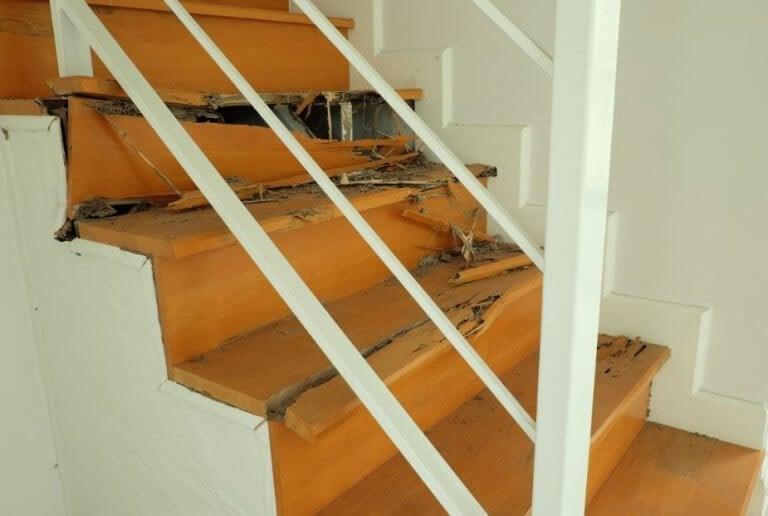 Kuinka pääset eroon kotonasi olevista termiiteistä