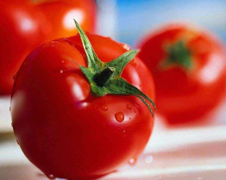 punaiset tomaatit