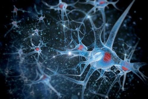 Verenkiertoon pääsevät myrkyt heikentävät hermoyhteyksiä.