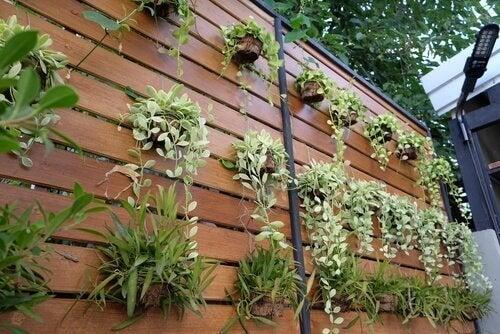 Neljä ideaa muuttaa seinä pystysuoraksi puutarhaksi