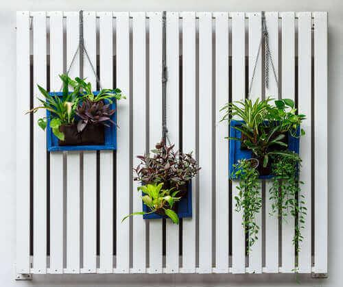 pystysuora puutarha rakennettu lautoihin