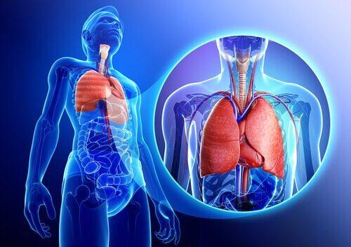 keuhkot ja astma