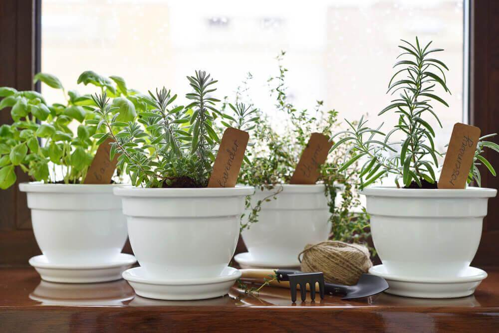 Näin luot kotiisi aromaattisen puutarhan