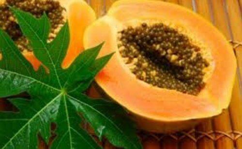 verihiutaleiden määrän kohentaminen papaijan lehdillä