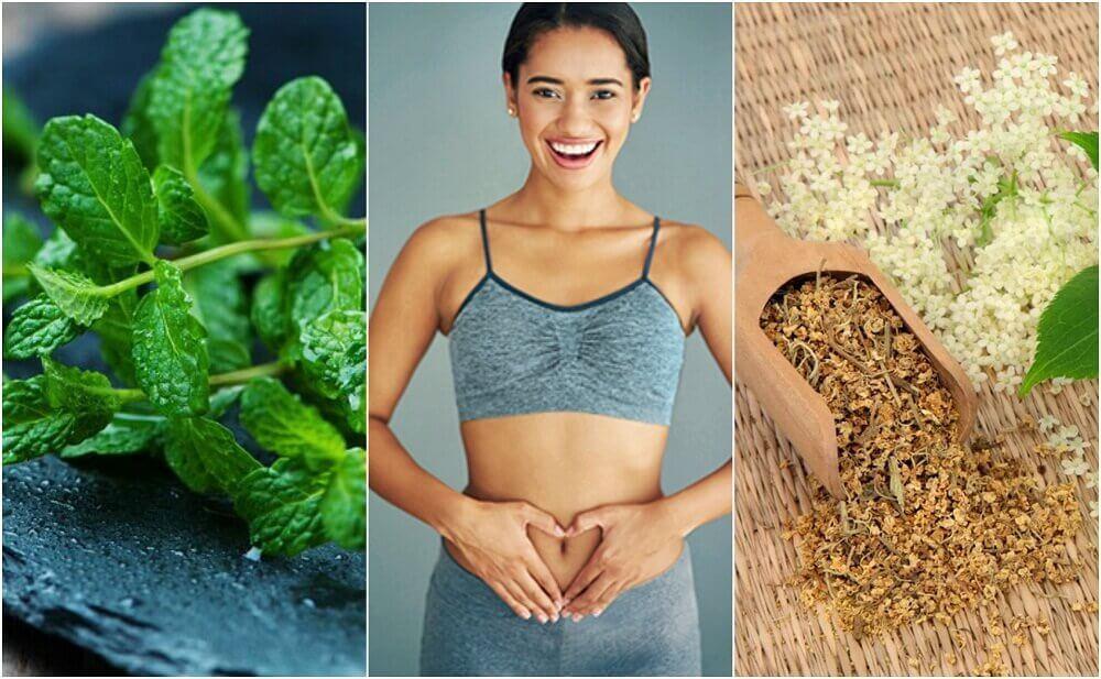 Huolehdi ruoansulatuksesta 6 parantavan kasvin avulla