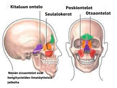 nenän sivuontelot ja niiden nimitykset