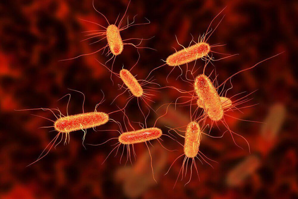 Paranna suolistoinfektio luontaishoidoilla