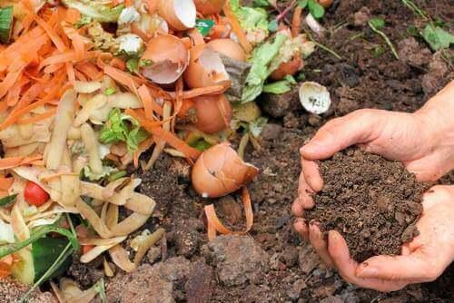 5 tapaa valmistaa luonnollinen lannoite kasveille