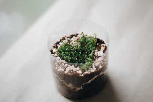 Neljä tapaa valmistaa kukkaruukkuja muovipulloista