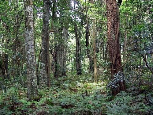 puut metsässä