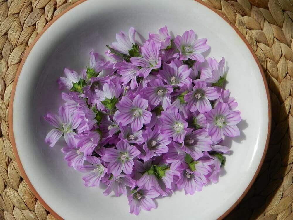 malvakasvin kukat